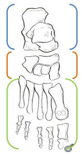 huesos-pie
