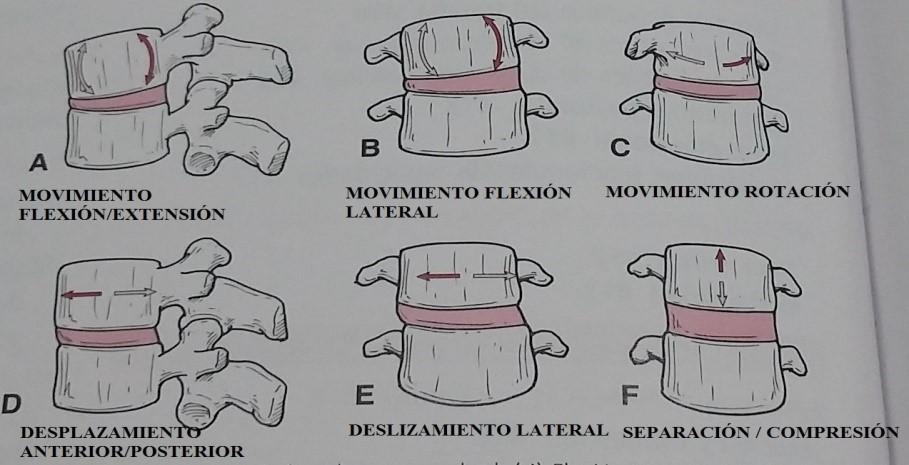 Imagen 2. Extraída de Ejercicio terapéutico. Fundamentos y técnicas. Médica Panamericana. 2010.